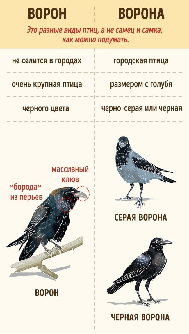Veshhi-kotoryie-myi-putaem-eshhe-so-shkolyi-5