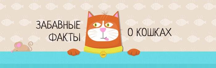 Zabavnyie-faktyi-o-koshkah-1