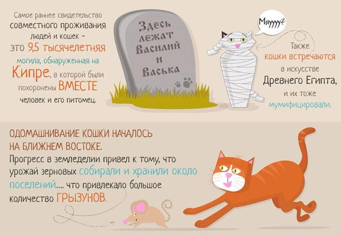 Zabavnyie-faktyi-o-koshkah-3