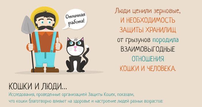 Zabavnyie-faktyi-o-koshkah-4