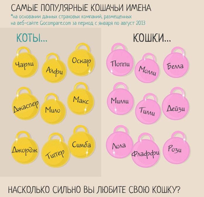 Zabavnyie-faktyi-o-koshkah-8